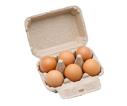telur-komersial-ppg