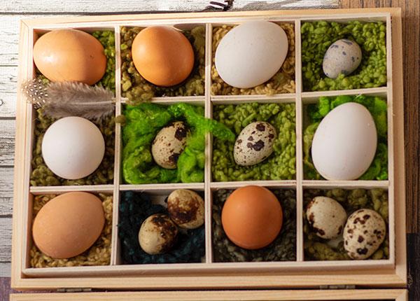 Telur puyuh dibanding telur ayam